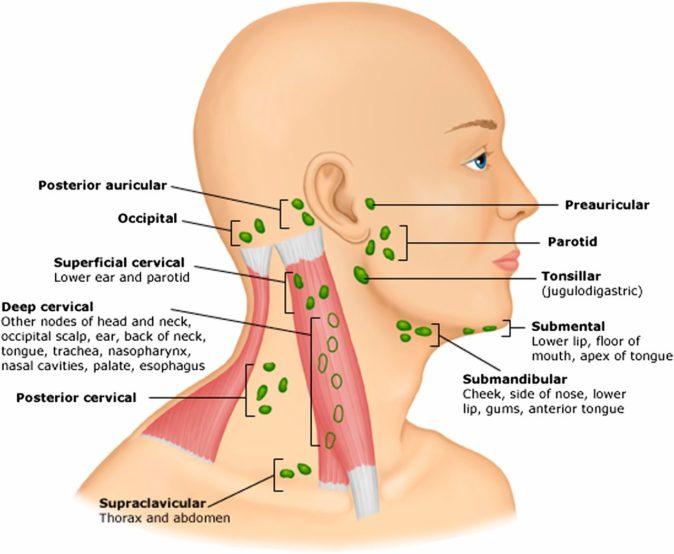 what do swollen lymph nodes feel like