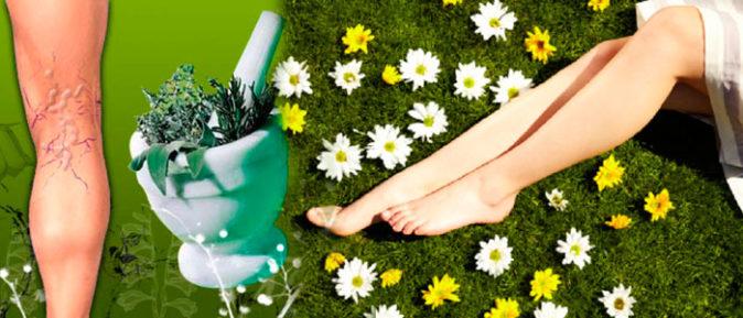 Varis için bitkisel tedavi