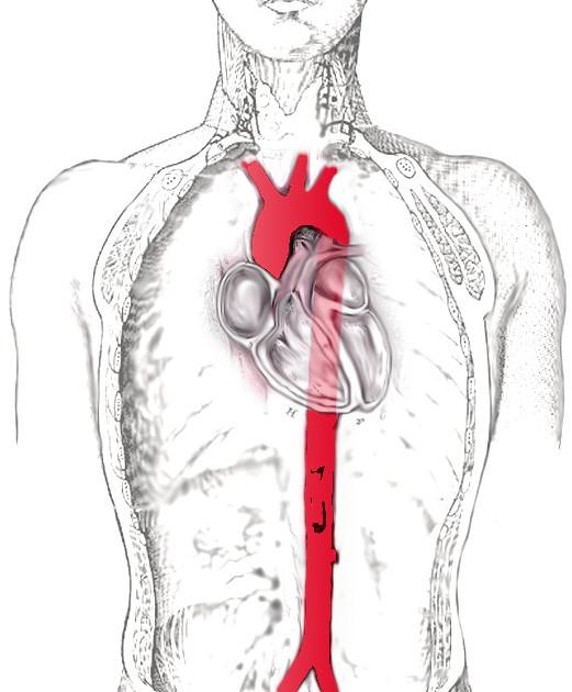 aort damarının bölgesi