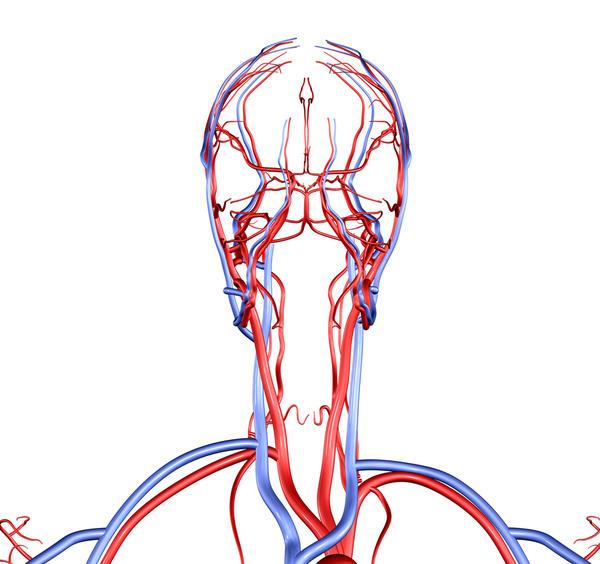Vertebral Arter